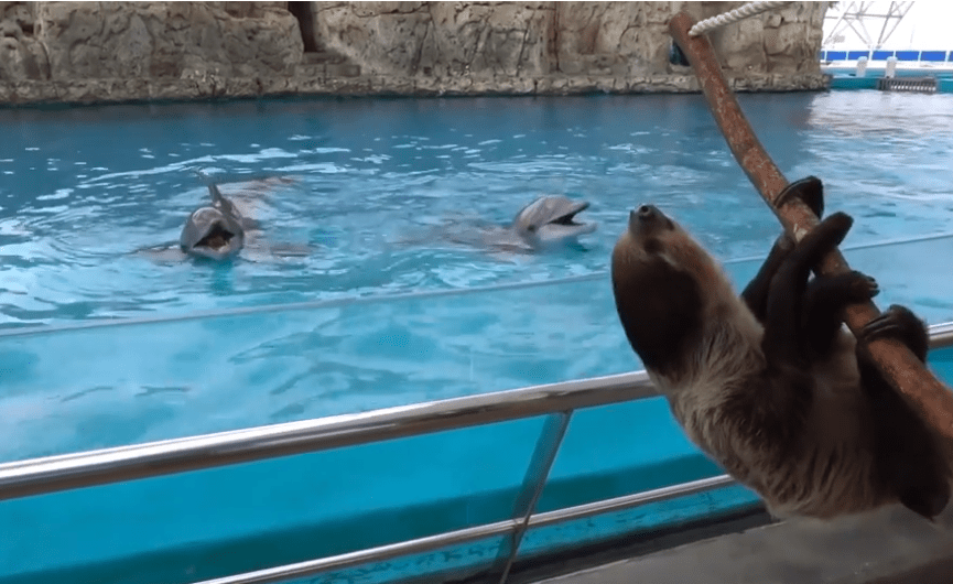 Land and seas animals at the Texas State Aquarium keep each other captivated